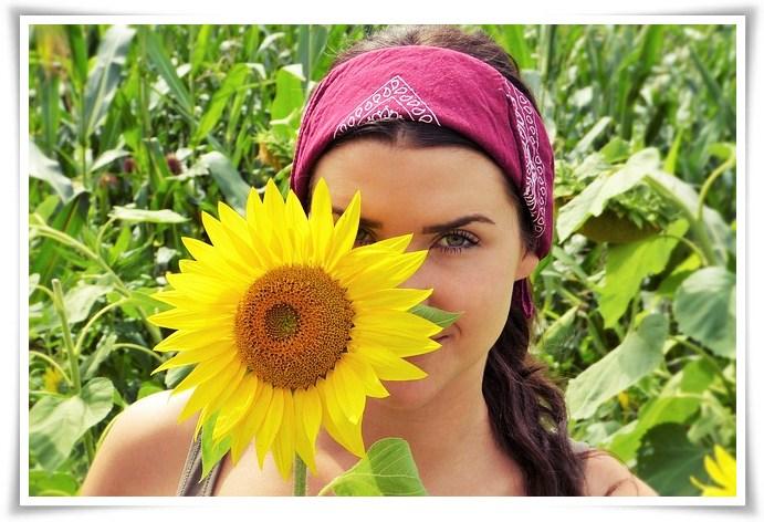 Sun Flower 2699771 640