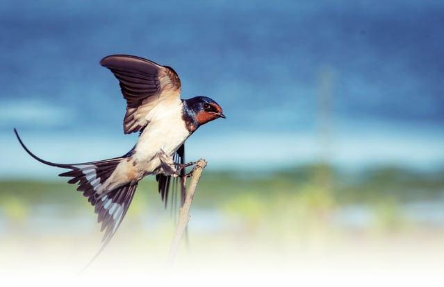 Manfaat Sarang Burung Walet Untuk Kecantikan Yang Jarang Diketahui